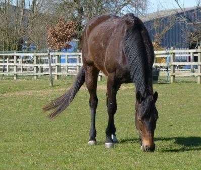 horse in dovehouse field