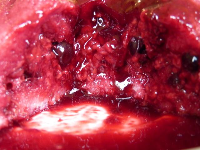 summer pudding raspberries blackcurrants