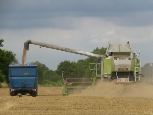 the tractor and trailer drive alongside while the wheat is emptied from the combine