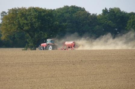 drilling (sowing) wheat Oct in dry conditions