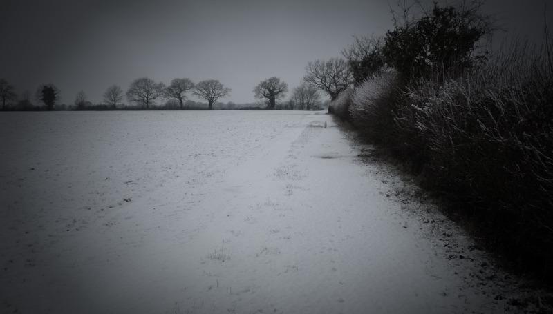 fields in snow