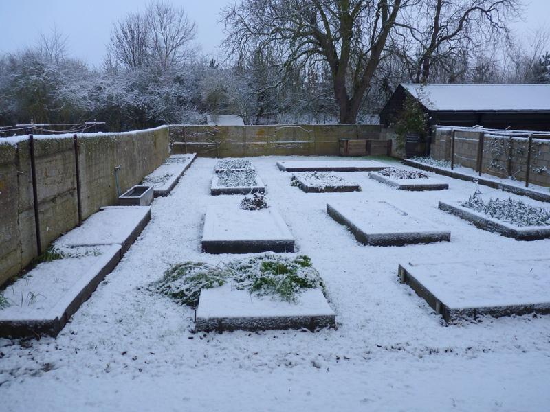 garden in snow-001