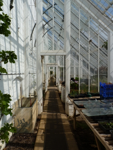 glasshouse at Holkham Hall