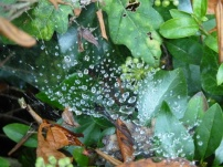 dew drops on spider's web