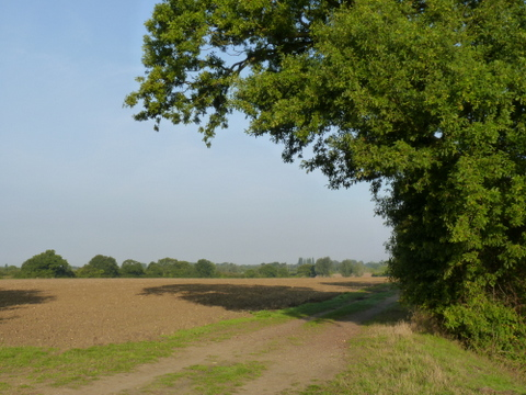 Great Forest field with edible hedge on right hedge on right