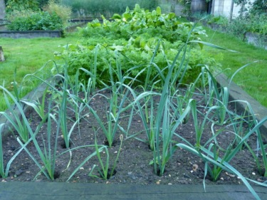 leeks september