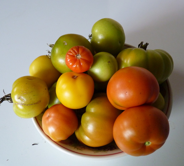 tomatoes from greenhouse Dec