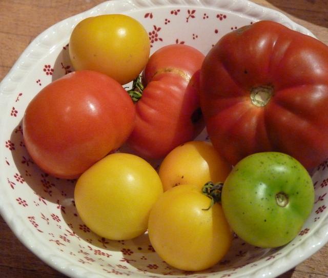 last tomatoes of summer