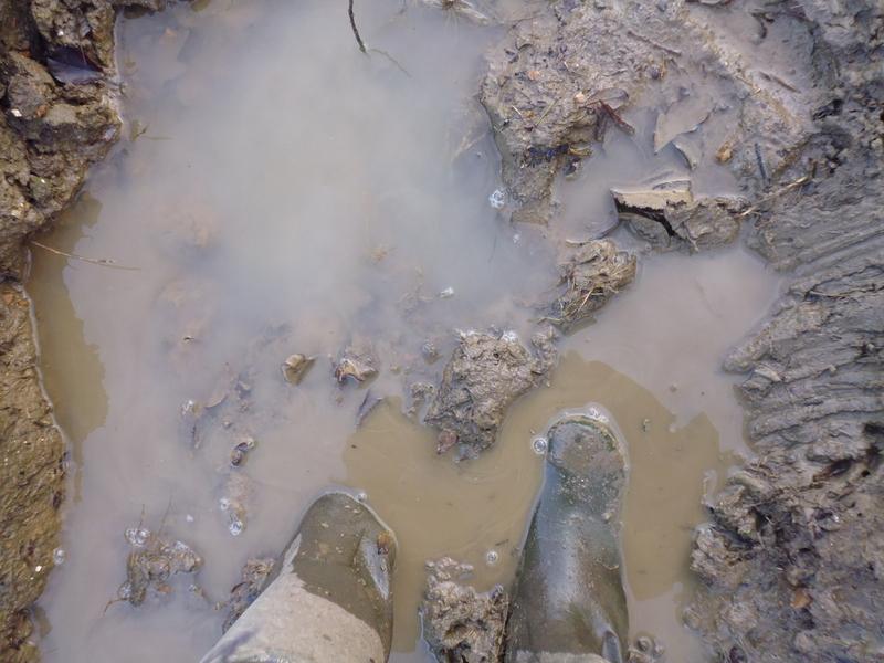 muddy-puddle