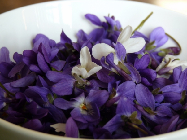 I know a bank where the violet grows