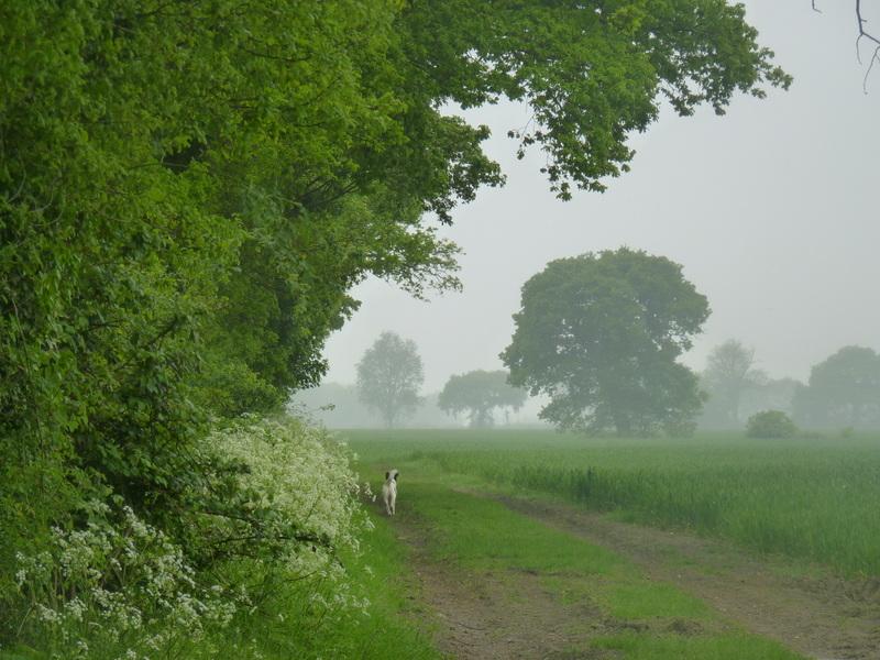 fields in the rain