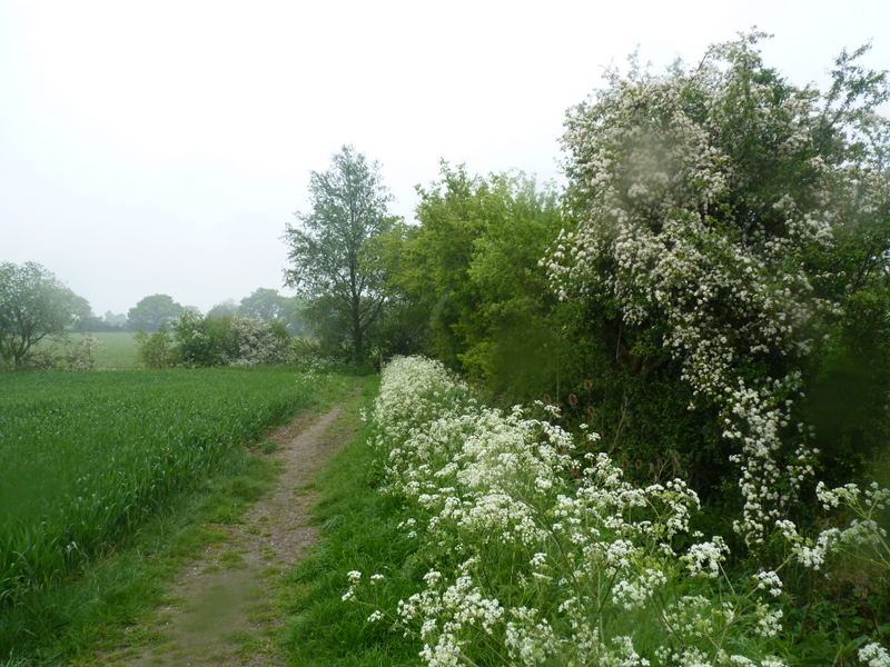 footpath in The Ley