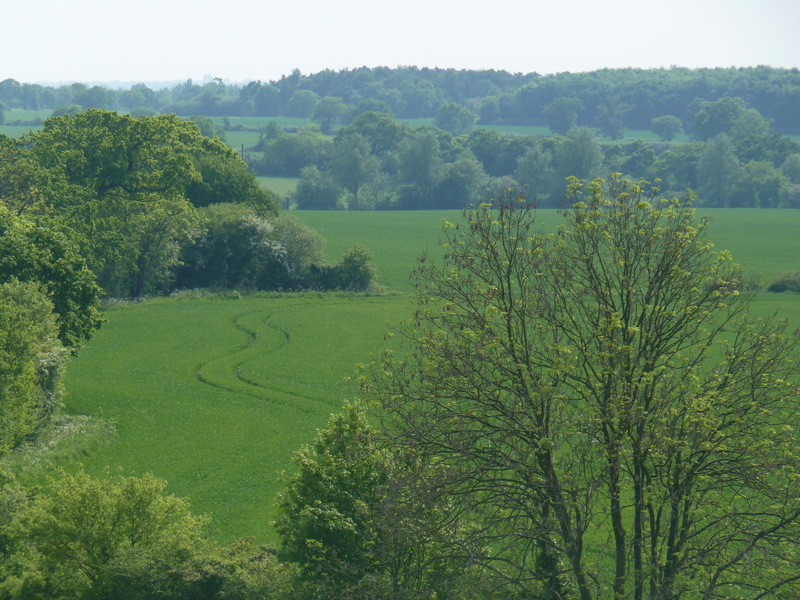 from Great Notley country park