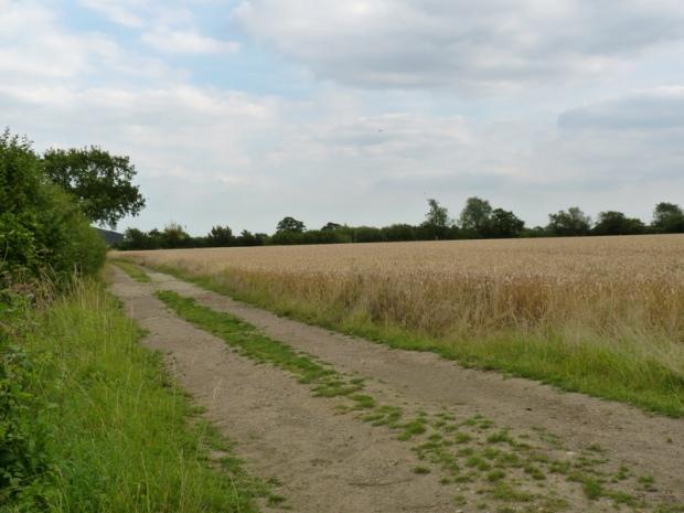 Little Forest field