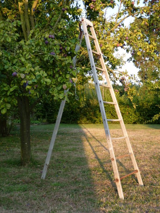 ladder in orchard