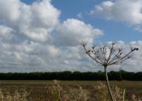 across grove field