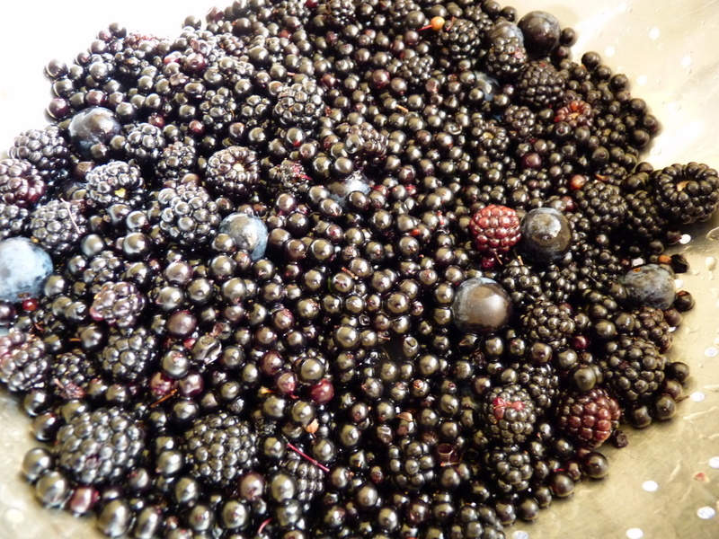 blackberries, elderberries and sloes