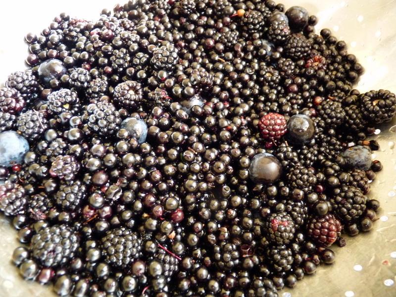 blackberries, elderberries and sloes