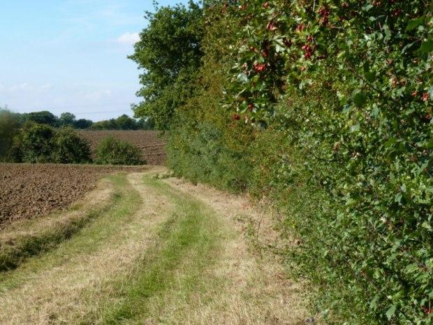 hedge Slamseys Farm