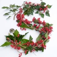 black bryony berries S