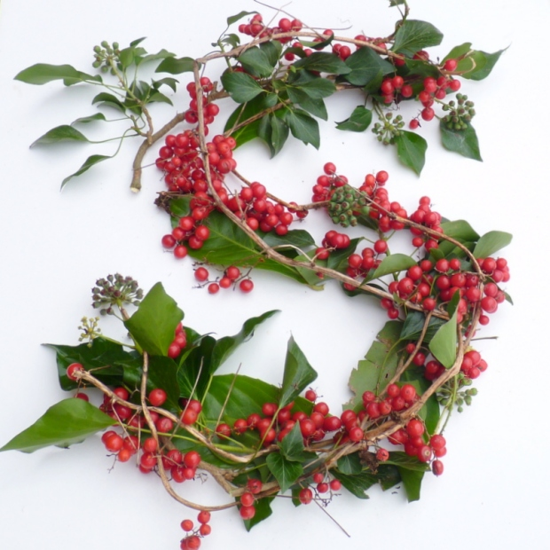 black bryony berries S