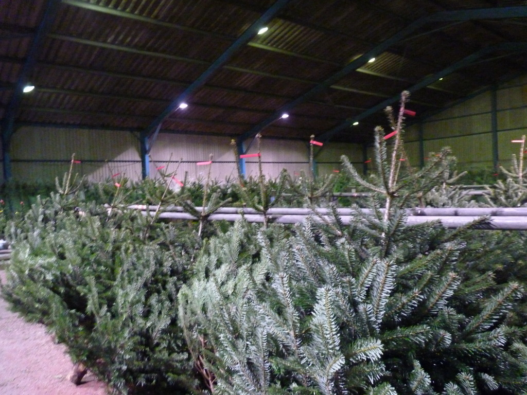 Christmas Tree Barn at Slamseys