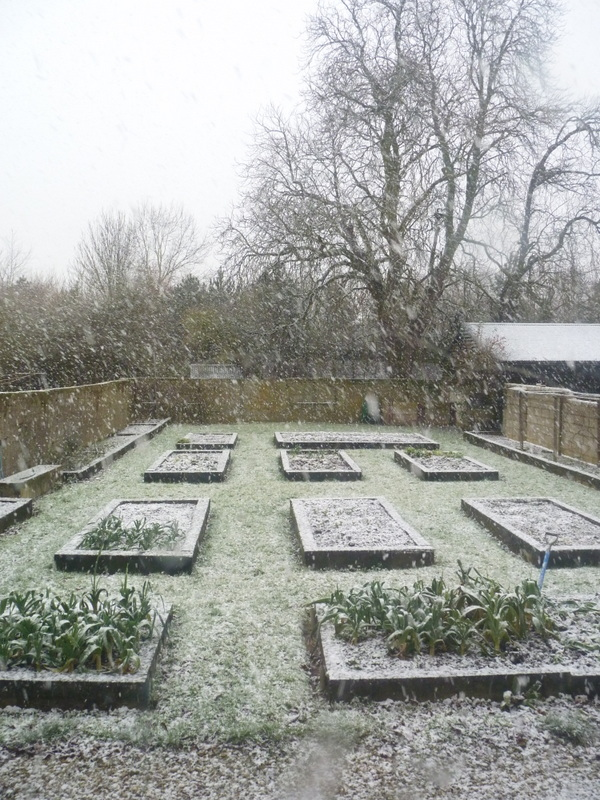 from the kitchen window February 2015