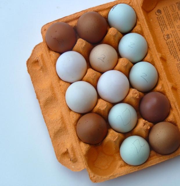 duck eggs and hen eggs