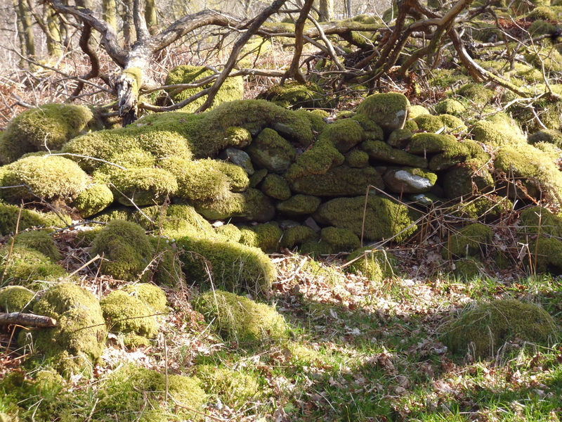 mossy stones on West Highland Way
