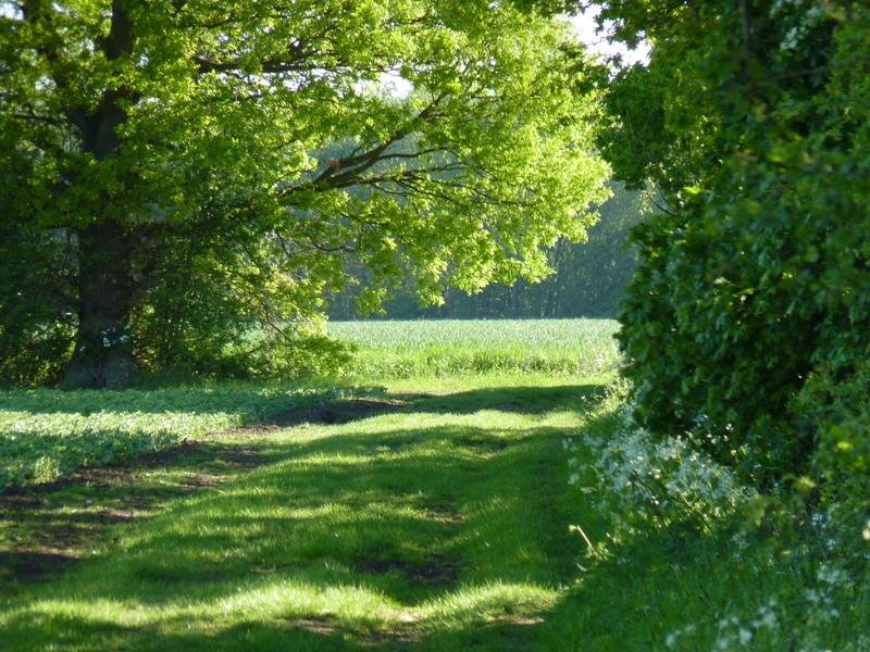 public bridleway Slamseys Farm, Great Notley