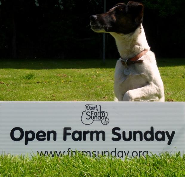 open farm sunday 2015