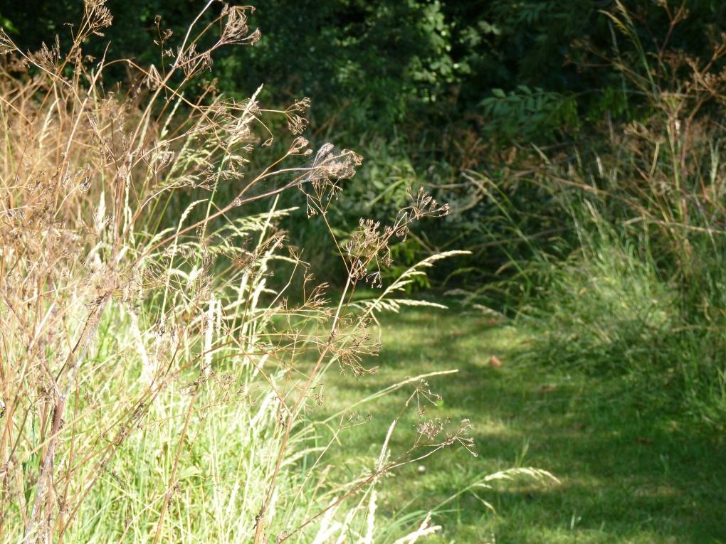 July wildflower walk