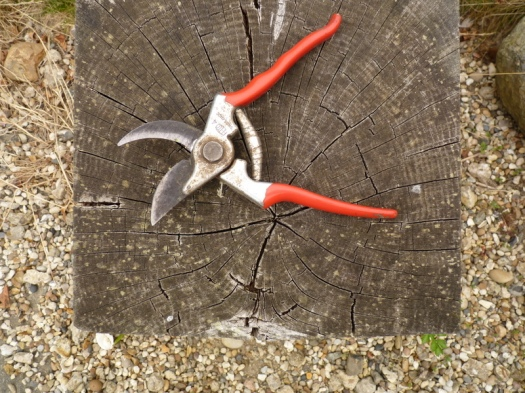 abandoned secateurs