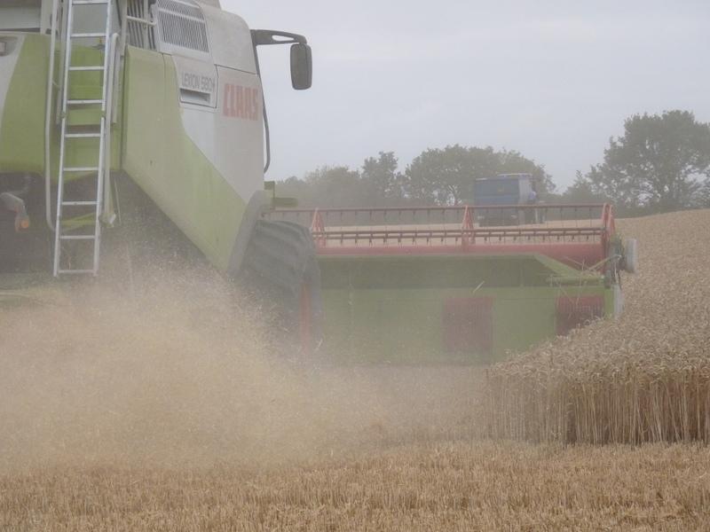 combining wheat 2015