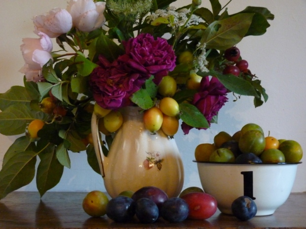 still life plums and roses