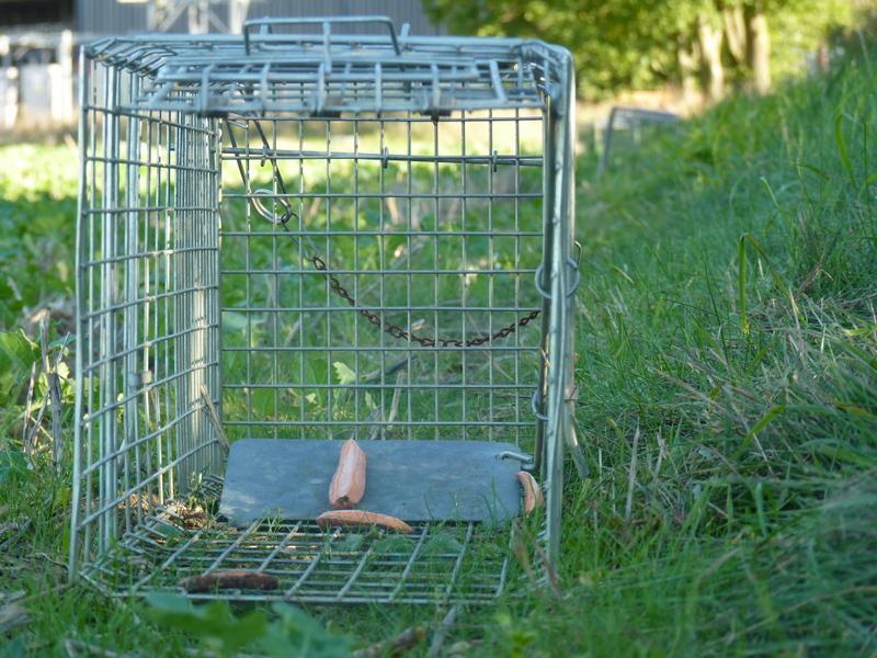 rabbit traps