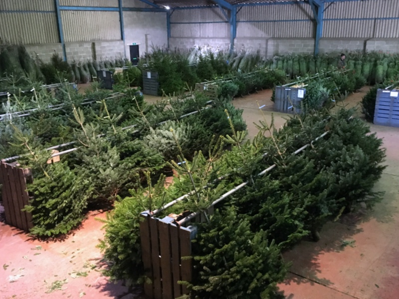 Christmas tree barn at Slamseys
