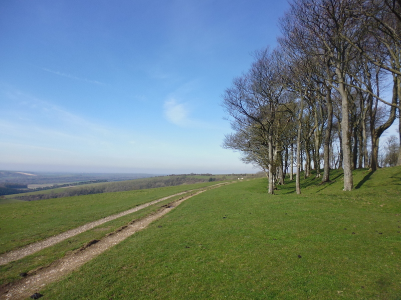 South Downs Way Chanctonbury ring