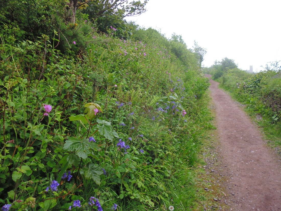Devon Coast to Coast Path near Wembury