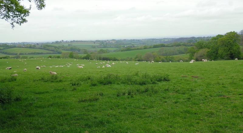 Mid Devon on 2 Moors Way