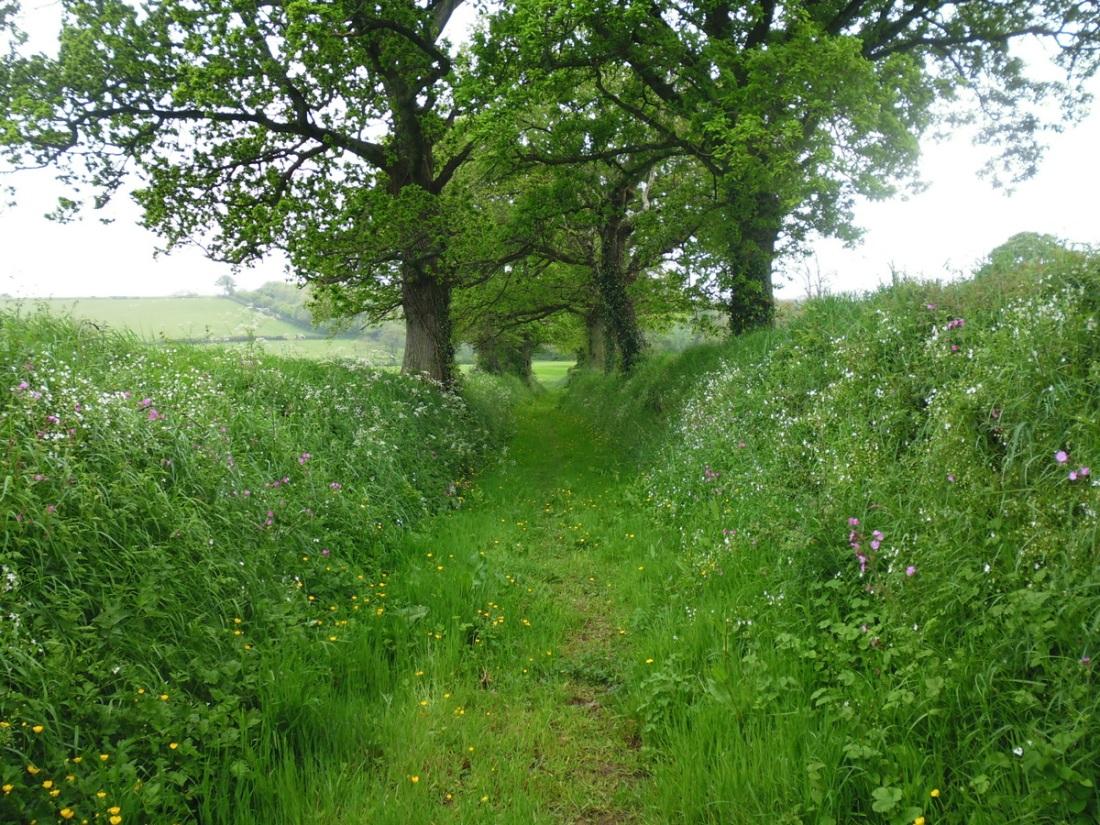 2 Moors Way