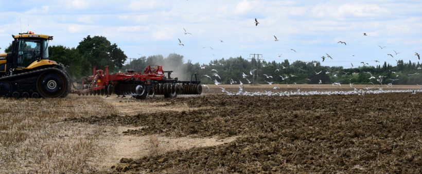 gulls following cultivator