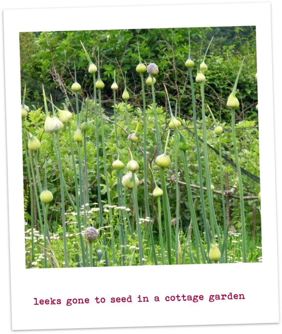 seeded leeks-