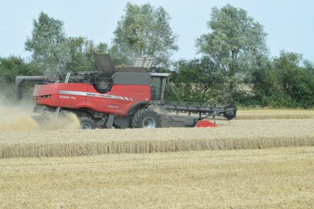 farm24 combining wheat