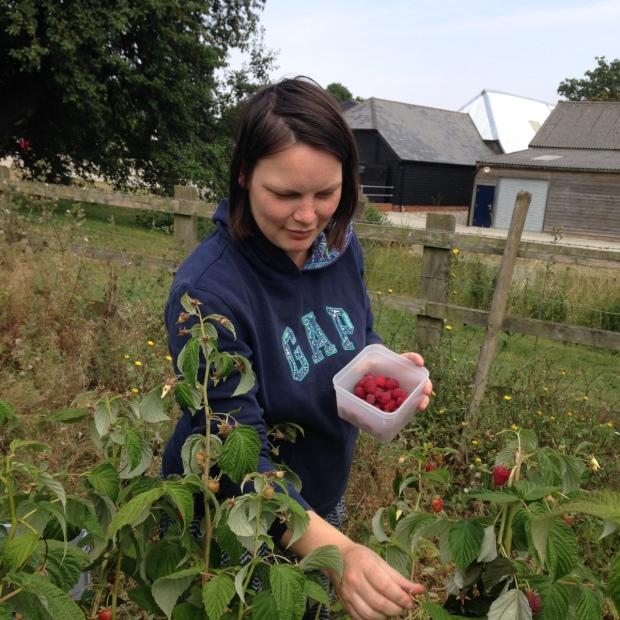 farm24 picking raspberries