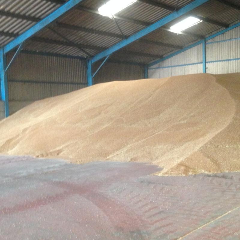 farm24 wheat in barn