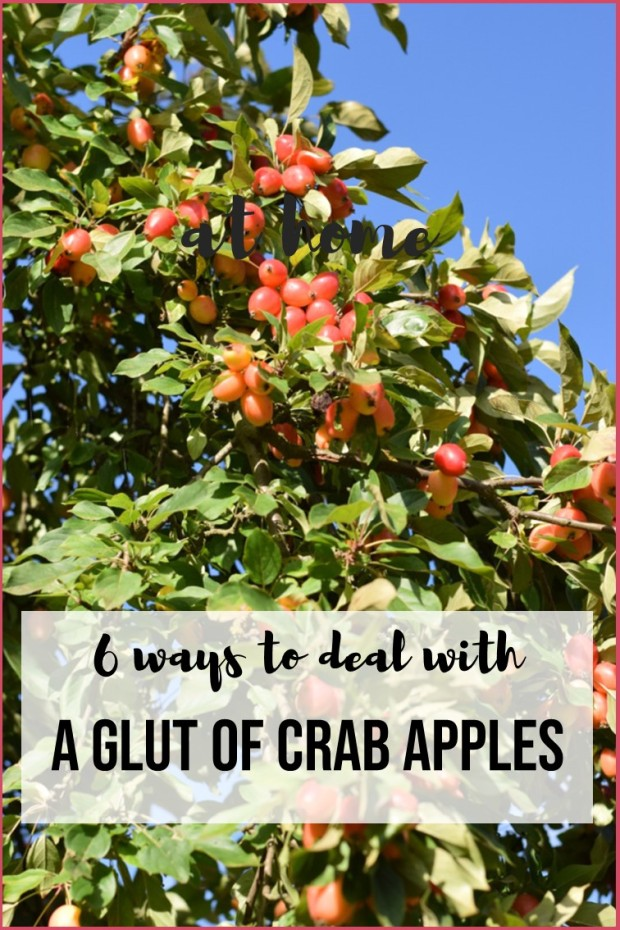 6 ways to deal with a glut of crab apples including recipes for preserves and craft ideas.