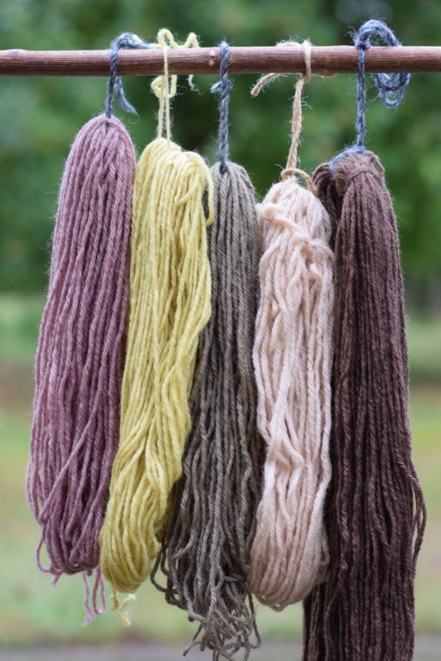 natural dyeing with blackberries