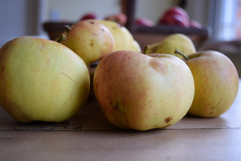 sunset apples and quince
