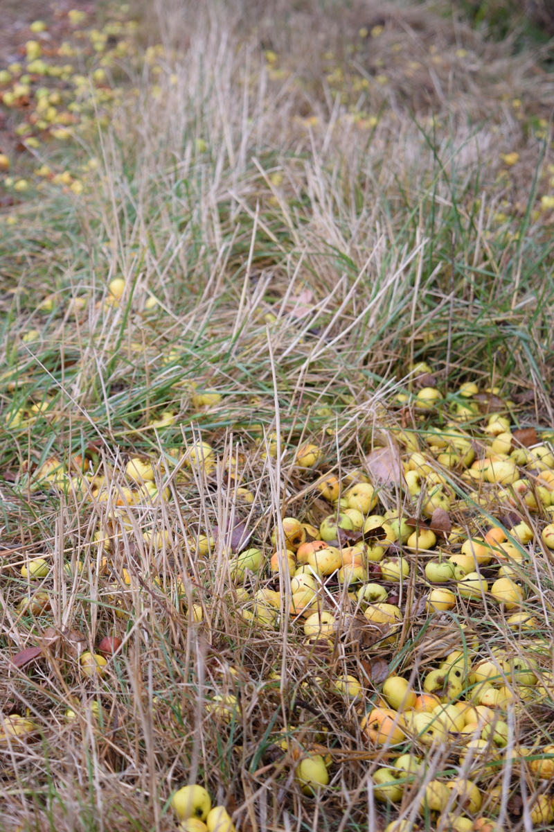 crab apples on footpath